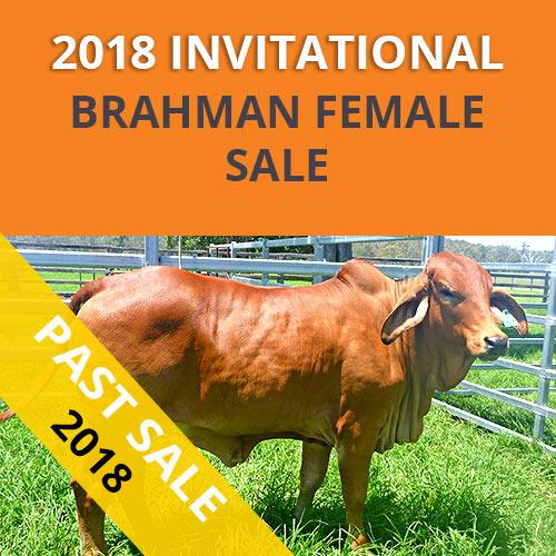 GREAT SOUTHERN BRAHMAN FEMALE SALE 2018