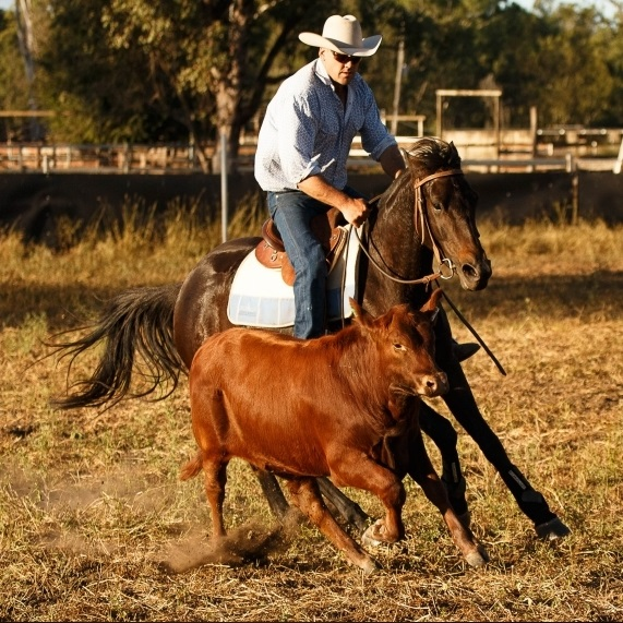 Nebo Horse Sale